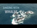 Singing with Whales https://www.youtube.com/watch?v=eDra_bd6Wu0