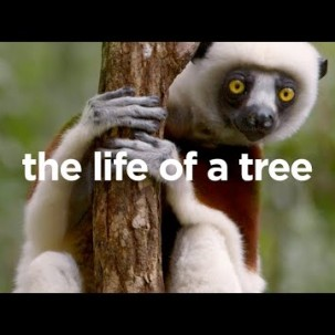 Life of a Tree