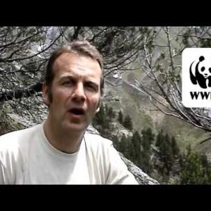 WWF - Bartgeier fliegen wieder!