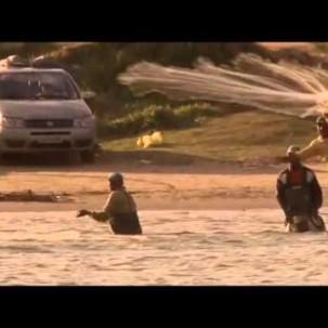 Delfine helfen Fischern in Brasilien