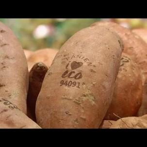 Dank Lichtstrahl: Natürliches Öko-Label für Obst und Gemüse