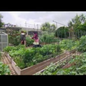 Urban Farms