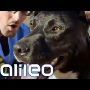 Knast-Hunde: Knackis als Hundeausbilder   Galileo   ProSieben