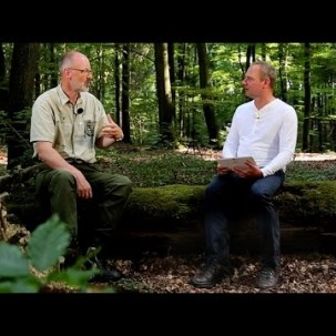 Das geheime Leben der Bäume, Peter Wohlleben, Lars Michael Storm, Beat von Stein