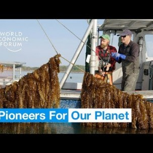 This incredible underwater farm could be the future of food | Pioneers for Our Planet