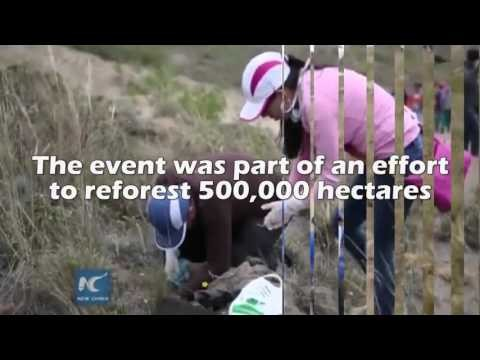 Volunteers in Ecuador Break World Record by Planting 647,250 Trees in One Day!