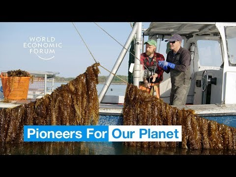 This incredible underwater farm could be the future of food   Pioneers for Our Planet